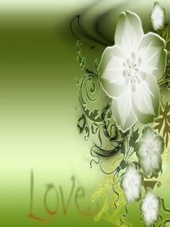 tinh yeu hoa hong